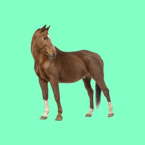 Paard RSC de Roosberg