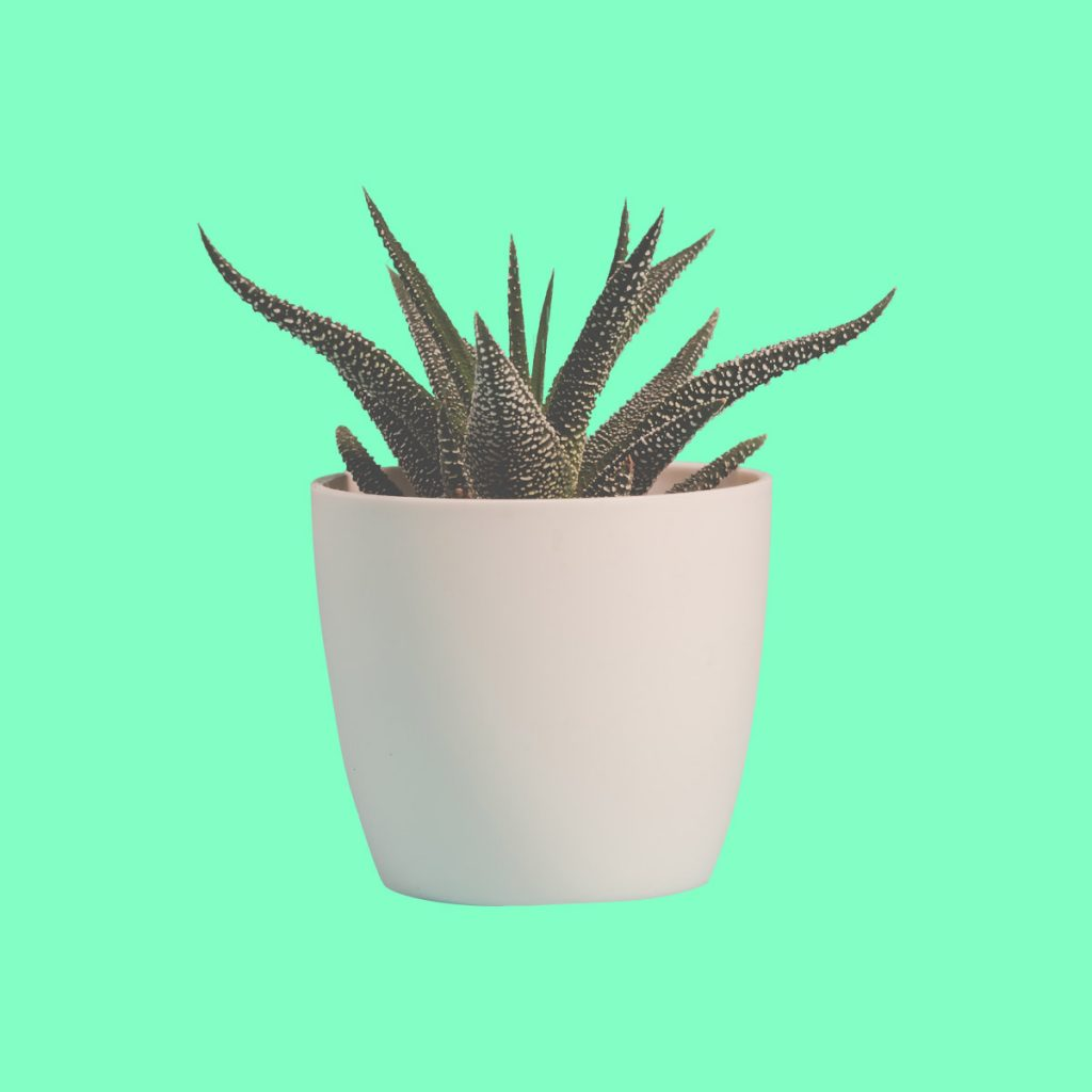Plant Beter Groen
